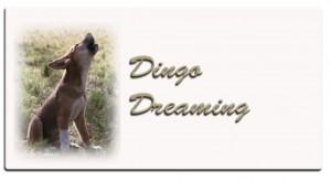 aa-dingo-dreaming