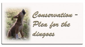 aa-dingoconservation-button