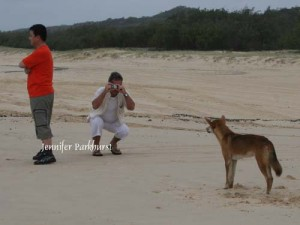 img_9376-dingo-aware