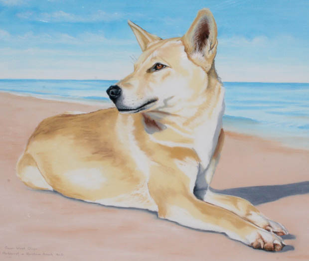 dingoes-3-img_4985