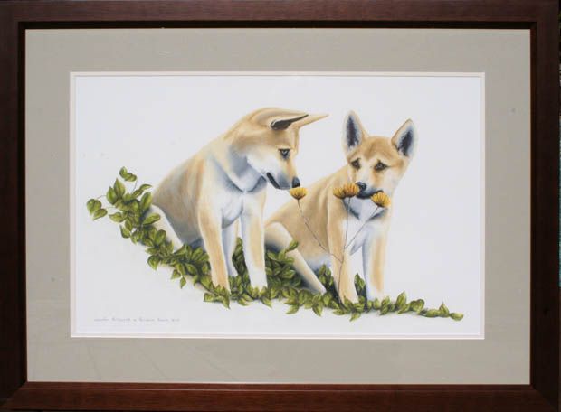dingoes-aa-baby-tuffy-pups1