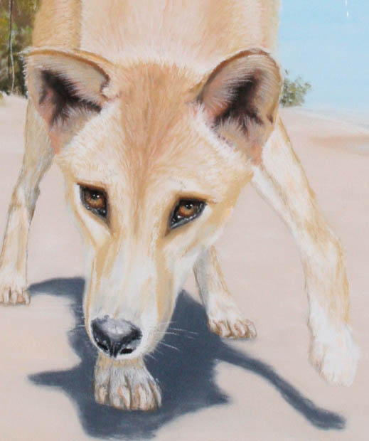 dingoes-img_4976