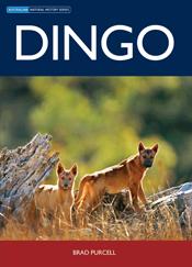 brads-dingo