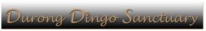 durong-dingo-sanctuary