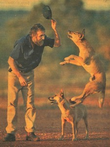 Taffy with some of his dingoes