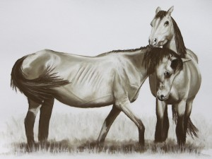 tuan-forest-brumbies-lo-res