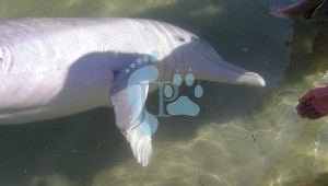 00-dolphins-mystique-pink-blush-copyright
