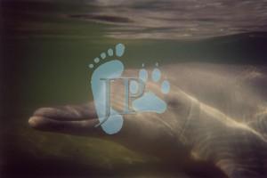 00-dolphins-mystique-underwater-copyright
